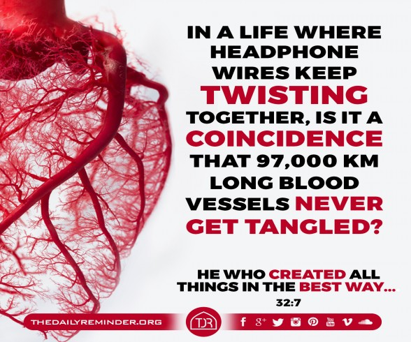 In a life where headphone wires keep twisting together, is it a coincidence that 97,000 km long blood vessels never get tangled?  He who created all things in the best way... [32:7]