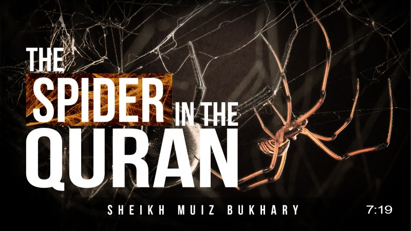 The Spider in the Quran